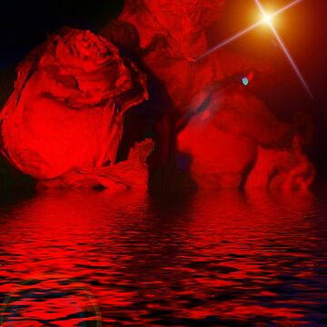 THE NIGHT ROSES by StarKatz
