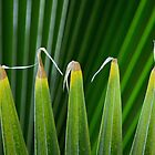 Leaf Fronds  by Laurie Minor