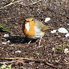 The robin gets it's reward by Sharon Perrett