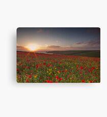 Cornish Poppy Field - Digital Art Canvas Print