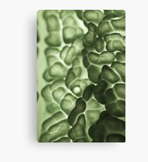 Macro of a savoy cabbage Canvas Print
