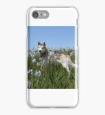 camas cruiser iPhone Case/Skin