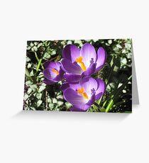 Harbinger of Spring! Greeting Card