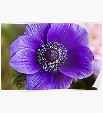 Purple Glory Poster