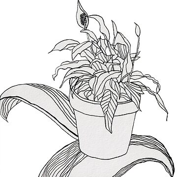 Drawing Peace Lily by fhjr2002
