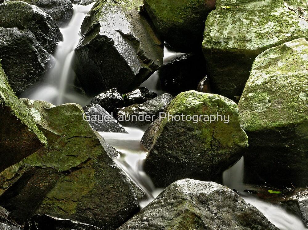 Rainforest Rocks  by GayeLaunder Photography