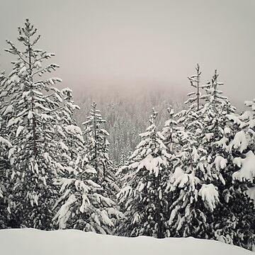 foggy fir forest by psychoshadow