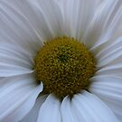 Have A Daisy Of A Day by Dana Yoachum