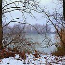 The Torbiere del Sebino in winter by annalisa bianchetti