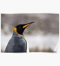 King Penguin Profile Poster