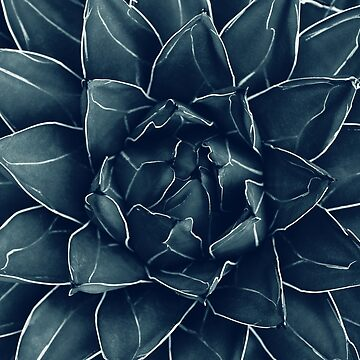 Agave Queen Succulent #1 #tropical #decor #art  by anitabellajantz