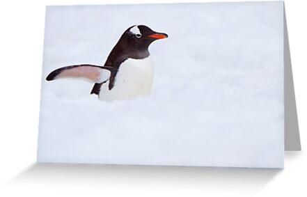 Penguin Highway by tara-leigh