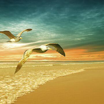 Soft Sunrise on the Beach 6 by ccmv