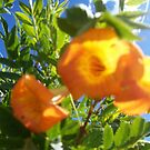 Yellow Flower by bviva733