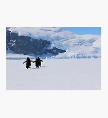 Adelie Penguins in Antarctica,   22 Photographic Print