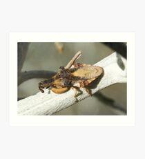 488 Macrocephalus dorannae Ambush Bug cd77f6df954ca
