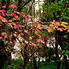 autumn pink leaves by TessAndre