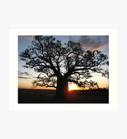 Boab tree silhouette at sunset Art Print