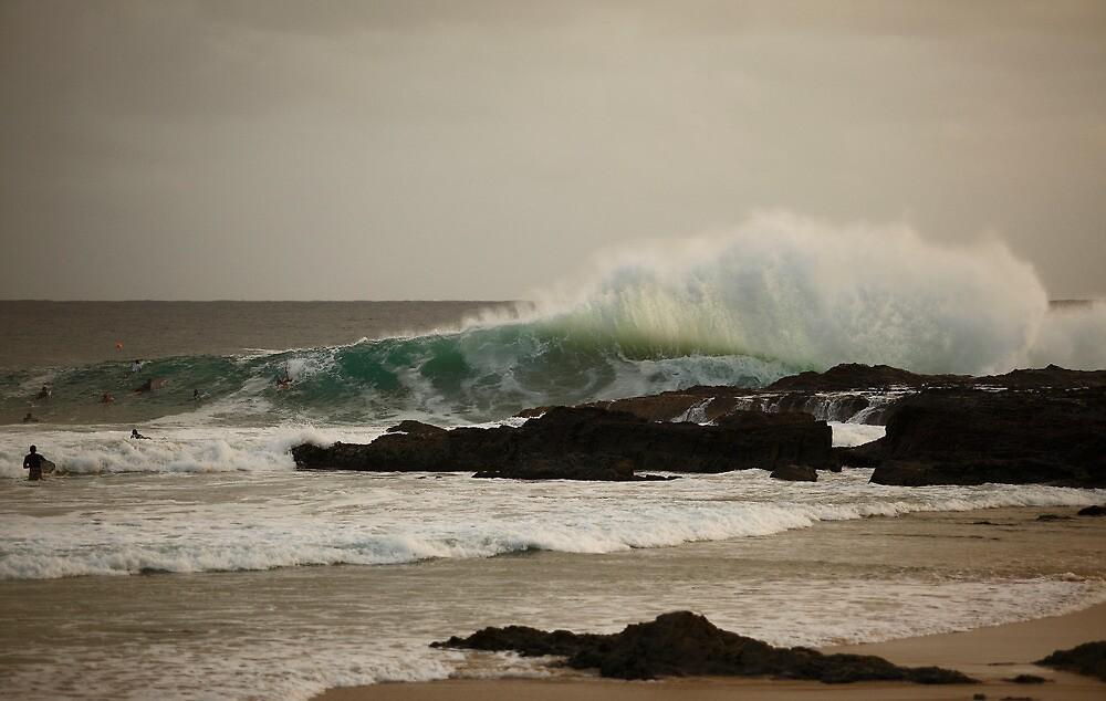 Snapper Splash Back... by Paul Manning