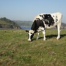 Cow by frogs123