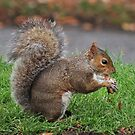Squirrel by frogs123