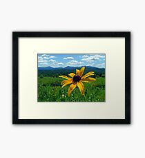Black Eye of the Adirondacks Framed Print