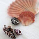 Sea Shells by Leesa Habener