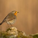 Robin perched on a mossy rock by Andrew Jones