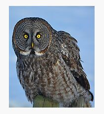 Great Gray Owl Portrait II Photographic Print