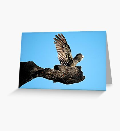 Teenage cockatoo looks to the future Greeting Card
