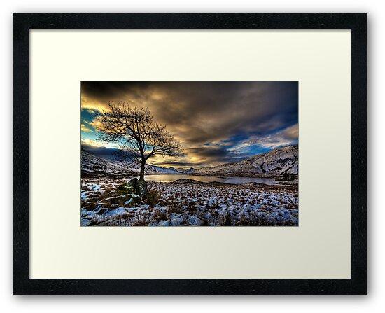Arklet Tree (2) by Karl Williams