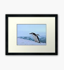 Chinstrap penguin in Antarctica, 4 Framed Print