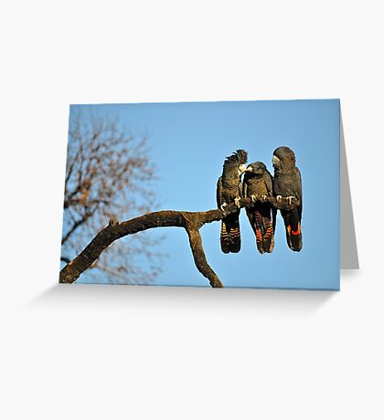 Family of Red-Tail Cockatoos at Feeding Time Greeting Card