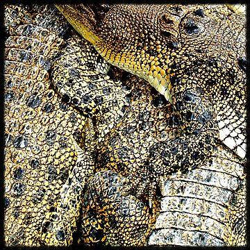 Crocodile skin by jembot