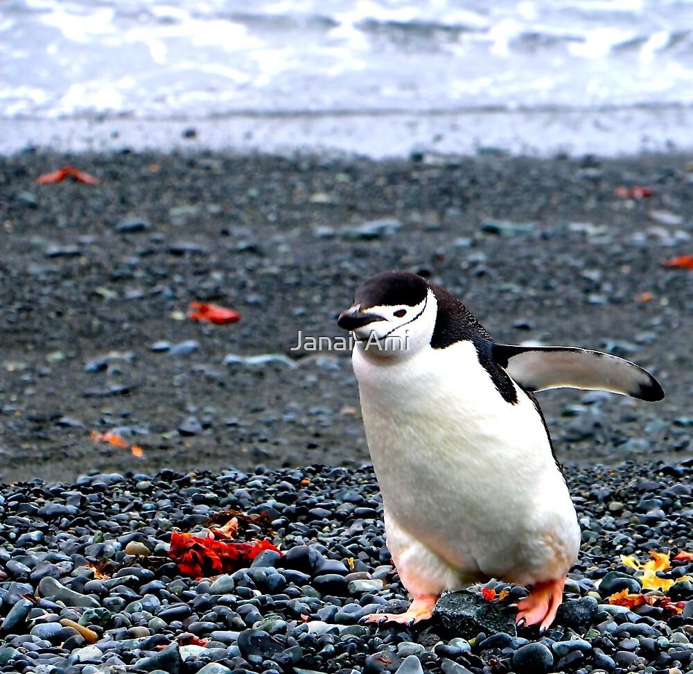 Chinstrap penguins in Antarctica,    10 by Janai-Ami