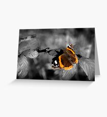 Admiral, Red Admiral Butterfly. Greeting Card