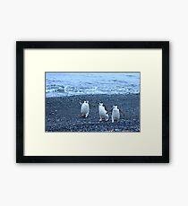 Chinstrap penguins in Antarctica,    11 Framed Print