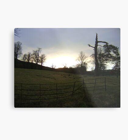 sunset, Falkland (trees, field with molehills, fence) Metal Print