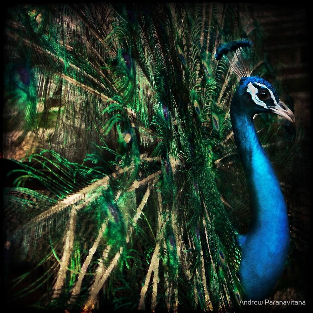 Splendour by Andrew Paranavitana