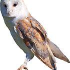 Low Poly Barn Owl by DesignsByDB