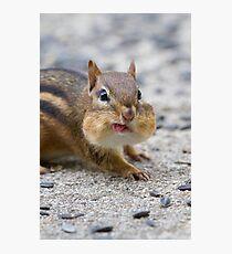 Funny Chipmunk Photographic Print