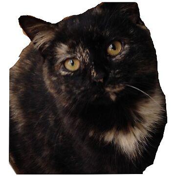 My Cat's Endless Stare by DazedPurple