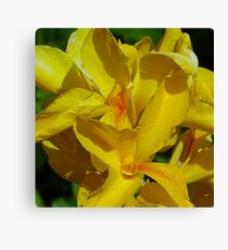Canna Lily - yellow Canvas Print