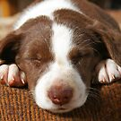 SSSHHH...PANDA'S SLEEPING... by Helen Akerstrom Photography