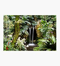 Oasis in the Polder # Photographic Print