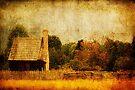 Quiet Life by Andrew Paranavitana