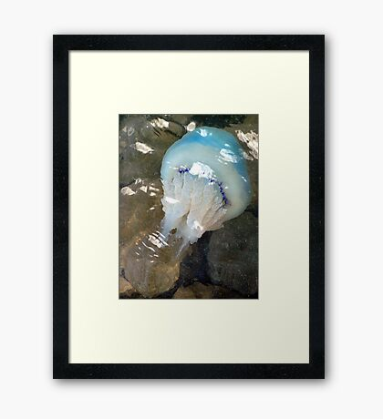 Yeuch.... Jellyfish and stings too! Framed Print