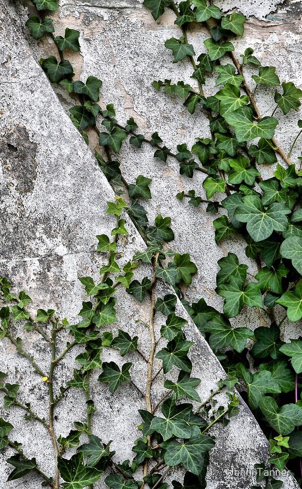 Climb by Jenni Tanner
