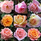 Rosen-Schönheits-Collage von BlueMoonRose