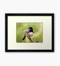 Costa's Hummingbird ~ Male Framed Print